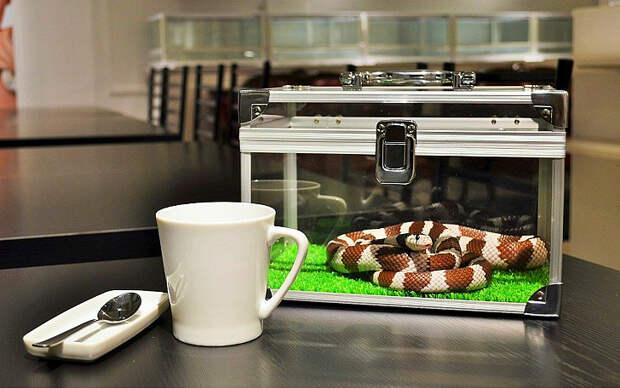 Змеиное кафе в Японии — жуть? Ещекакая!