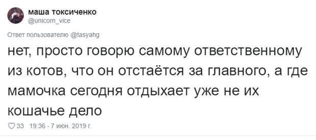 7. Тася Никитенко, животны, забавно, кот, кошка, люди, твиттер, юмор