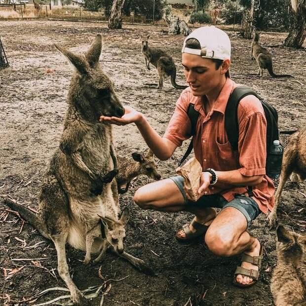 Парень сильно напился перед Новым годом, а спустя несколько месяцев он узнал, что усыновил кенгуру
