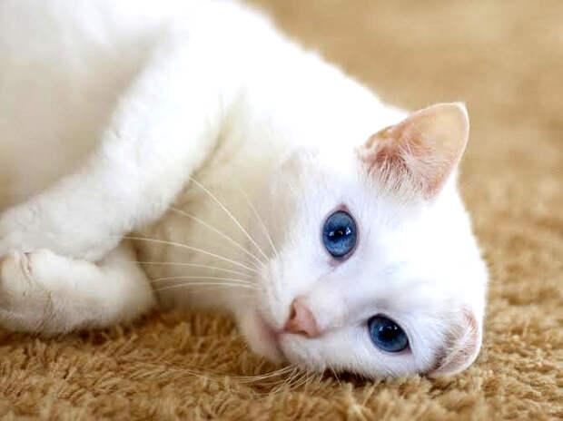 Пятничный котик Кокос – его выбросили, но он надеется