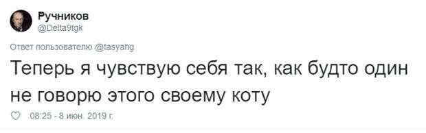 18. Тася Никитенко, животны, забавно, кот, кошка, люди, твиттер, юмор