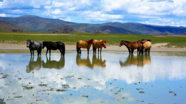 лошади в Монголии
