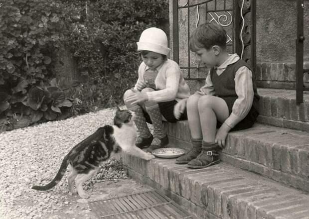 Ретро-фотографии котов 20-х годов прошлого века