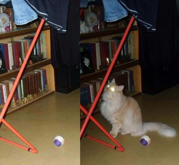 """И напоследок фото из серии """"Загадочное"""". Разница между левым и правым снимком полторы секунды. кошки, межвидовые отношения, собаки"""