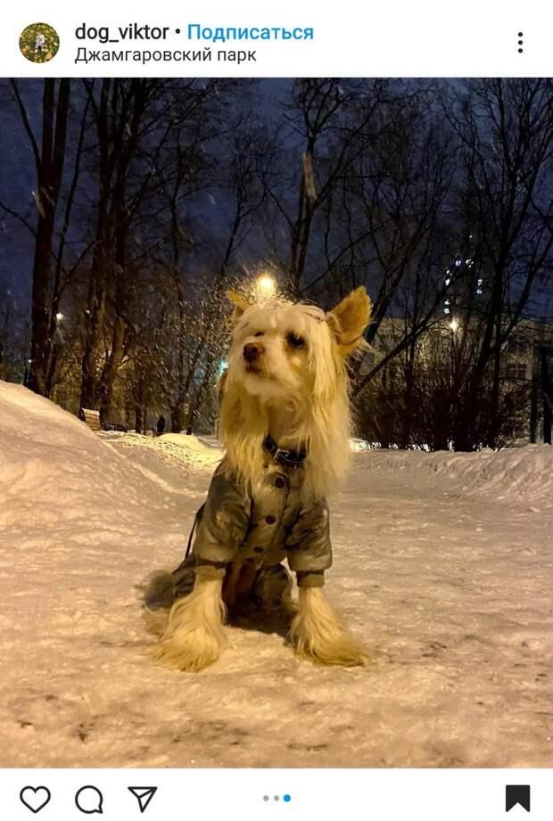 Фото дня: в Джамгаровском парке гулял длинноволосый модник