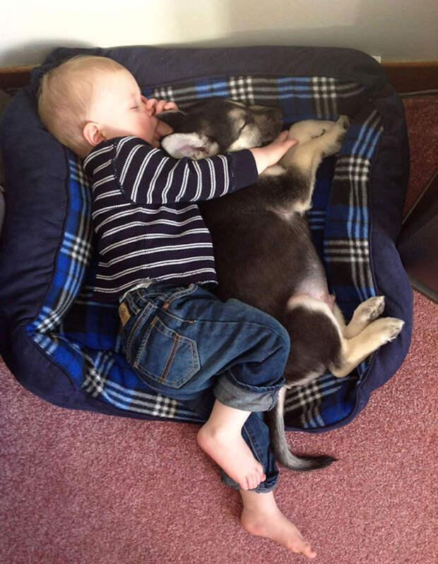11 трогательных фотографий, доказывающих, что всем детям нужны домашние животные
