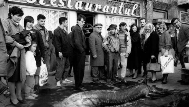 Суровая Румыния 90‑х, где стада овец перегораживали оживленные улицы