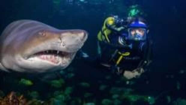 Пять лучших мест на земле, где можно поплавать с акулами