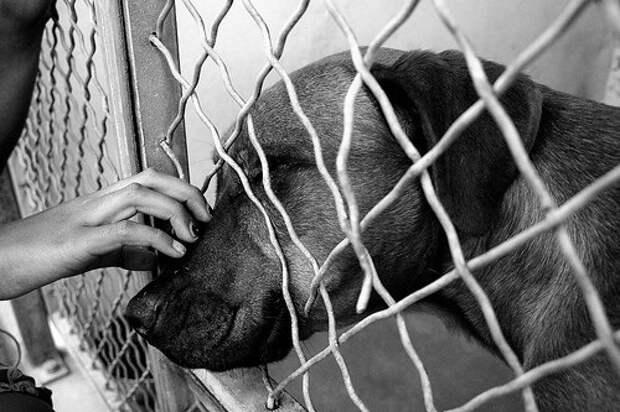 Рождественская сказка. История для всех собак, не потерявших надежду