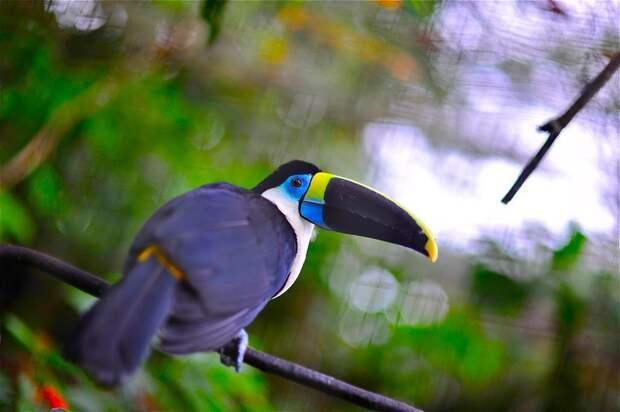 Amazonas18 Большое фотопутешествие по лесам Амазонки