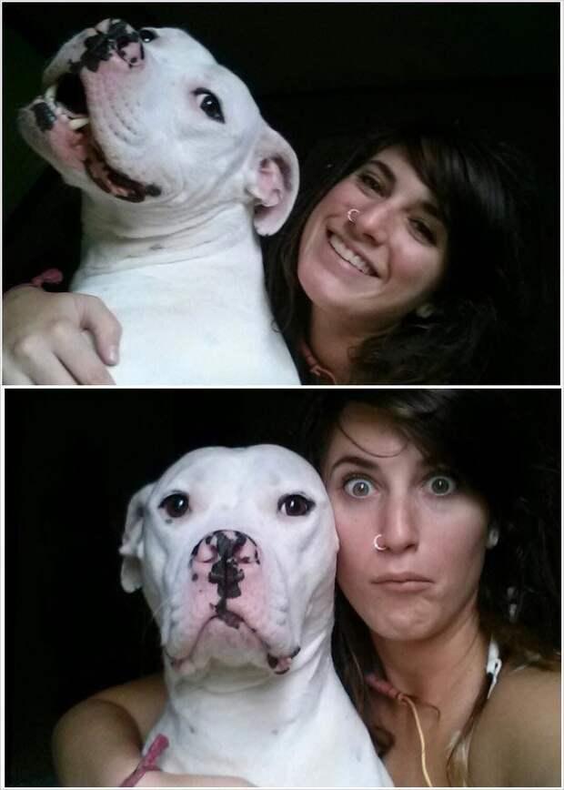 """20  """"веских"""" причин, почему никто и никогда не должен заводить питбуля животные, питбуль, причина, собака"""