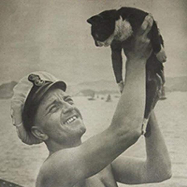 Кошки в море
