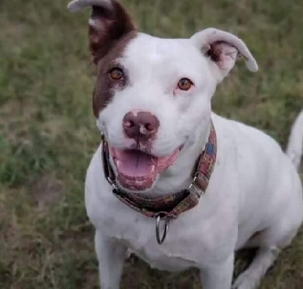 Недавно эта собака жила на паркинге при отеле, и ее все не любили, а теперь питомица покоряет океан