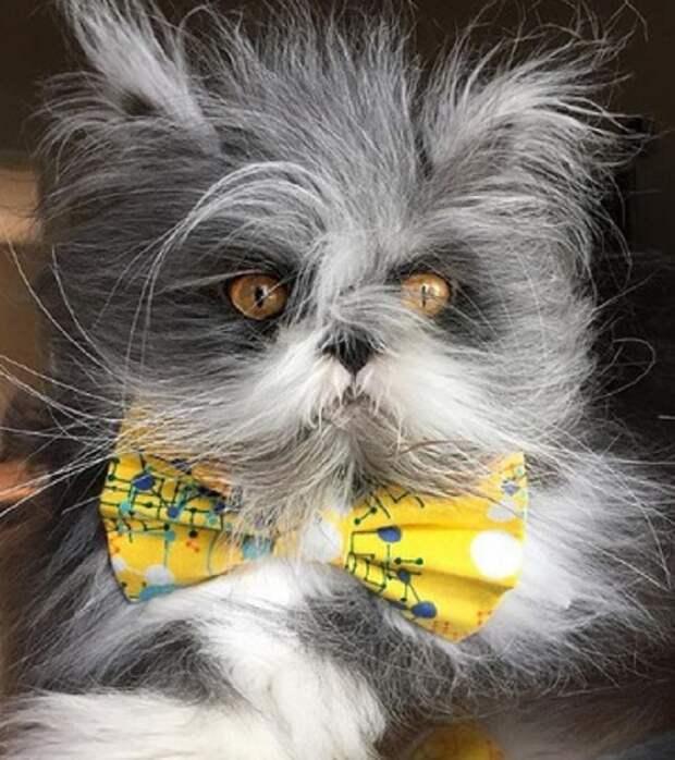Кот с бантом