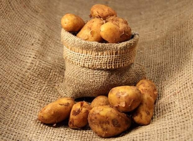 Как выкапывать и хранить картофель