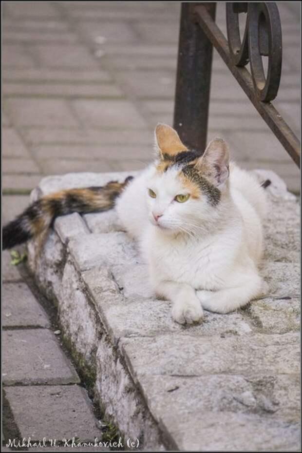 Питерские котЭ!