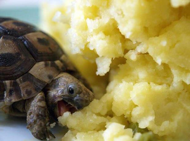 28. Малыш ест картофельное пюре ниндзя, питомцы, черепахи