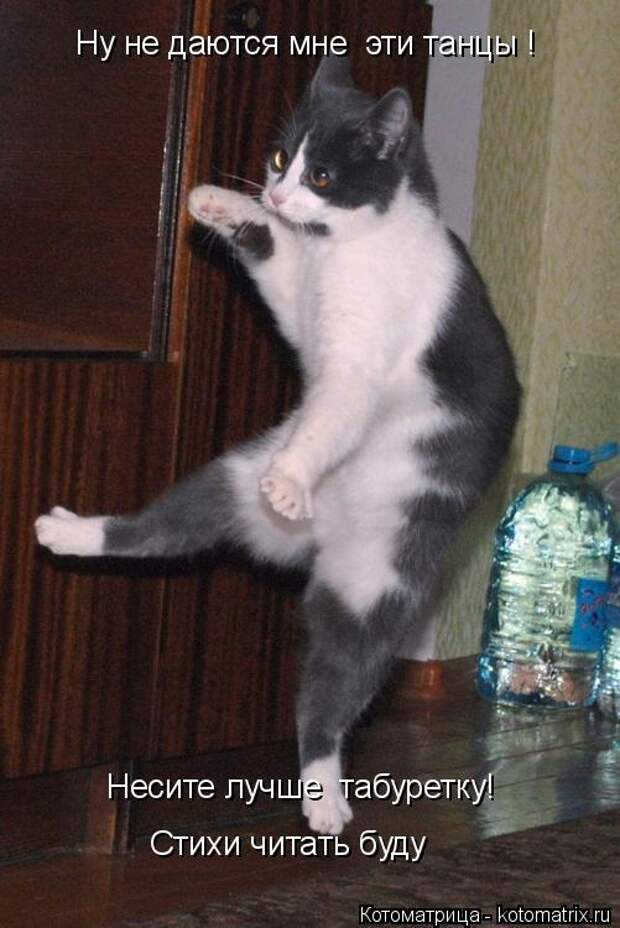 Котоматрица: Ну не даются мне  эти танцы !  Несите лучше  табуретку! Стихи читать буду