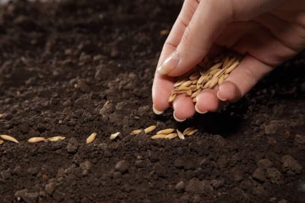 Вопрос знатокам: Последовательность посева семян с разными сроками созревания DACHA5.RU