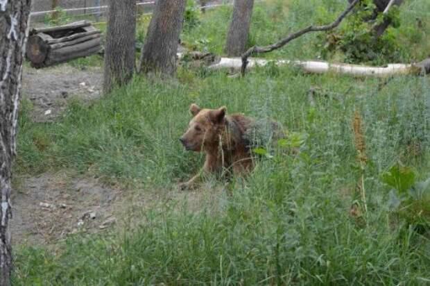 Этих медведей должны были отдать на растерзание псам. Но в последнюю минуту случилось чудо