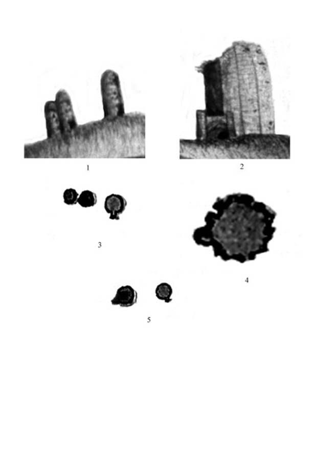 Башенные мавзолеи Маджара