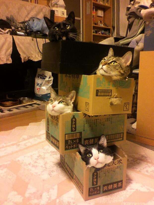 cathouse33 Дизайн для котов