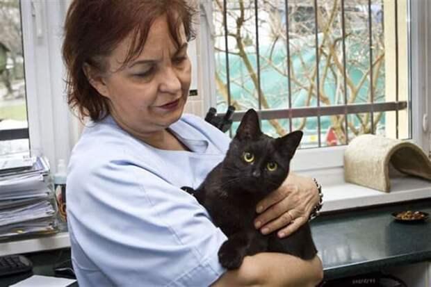 Сердце у кошки может быть еще добрее, чем у человека. Не верите? Тогда прочитайте эту историю!