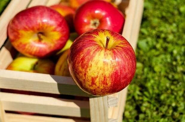 7 продуктов накапливающие внутри настоящие яды