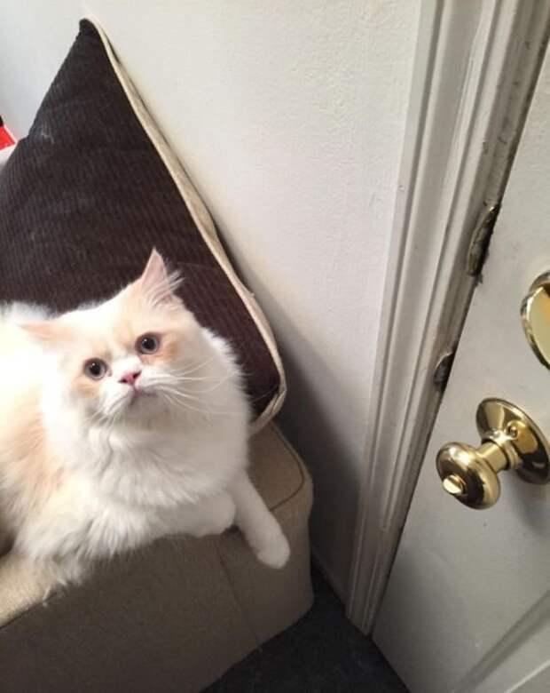 Кот, которого не так просто оставить одного дома