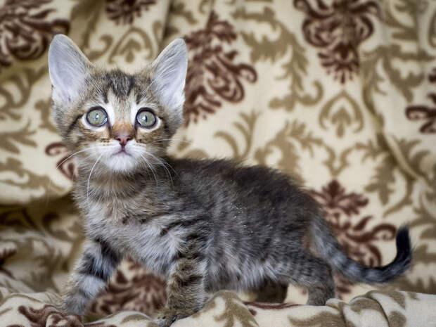 Пятничный котенок Хорхе: самый храбрый в мире кроха