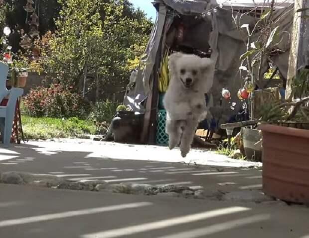 Собака прыгает