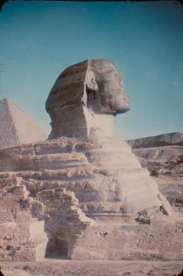 Гиза. Пирамиды. Сфинкс крупным планом. 1950