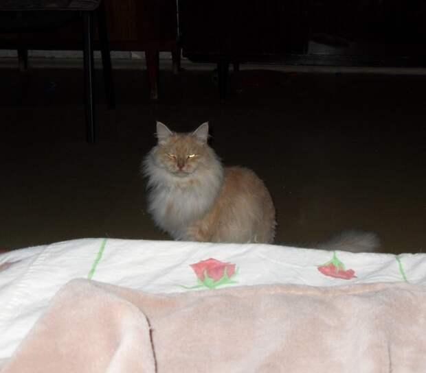 Хамура Кусаки. Ночная жизнь кошки, межвидовые отношения, собаки