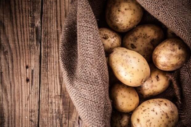 Вековой опыт. Как хранили урожай картофеля предки?