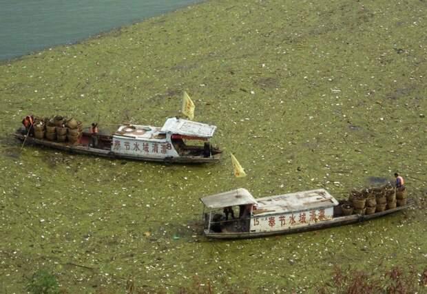 2. Рабочие вылавливают плавающий мусор из реки Янцзы загрязнение, китай, экология