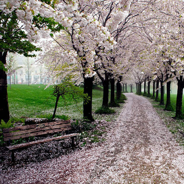 Магические тропы, которые созданы для прогулки