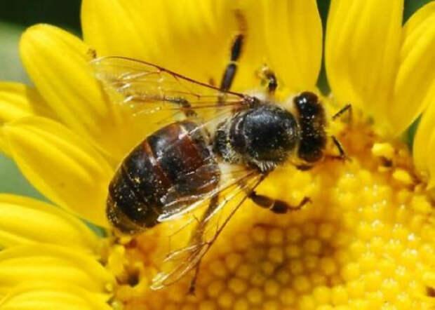10 необычных органов чувств представителей мира фауны