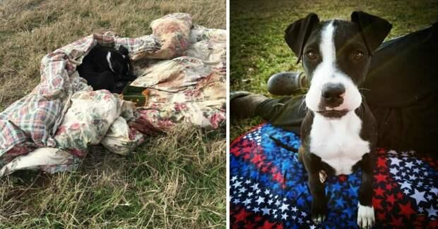 Собака тащила одеяло на улицу. Когда хозяйка узнала причину, была очень удивлена..