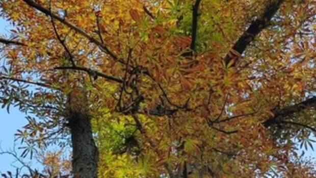 В Белгороде заменят 732 дерева