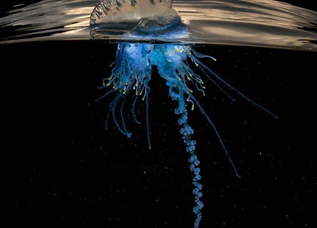 Загадочный подводный мир (Matthew Smith, Австралия).