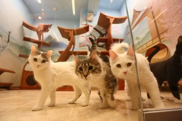 Юрий Куклачев собирается построить «дворец кошек» стоимостью $1 млн