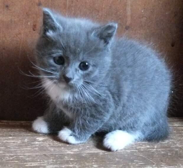 Повёз котёнка на осмотр, а он подумал, что хотят вернуть на улицу и переосмыслил своё хождение мимо лотка