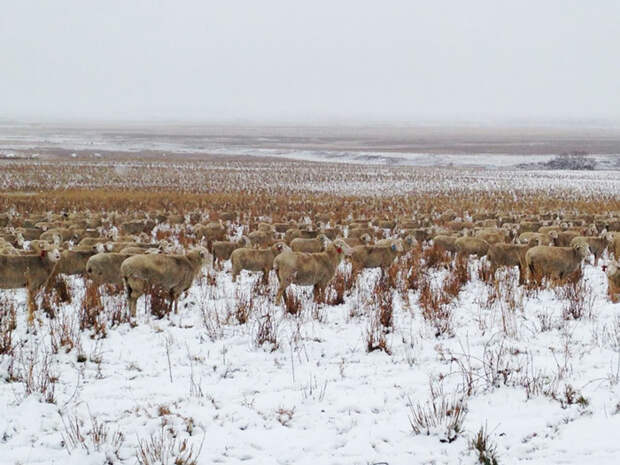 Фотообман: найдите овец на фотографиях