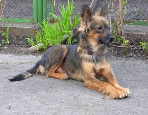 Собака с перерезанным горлом