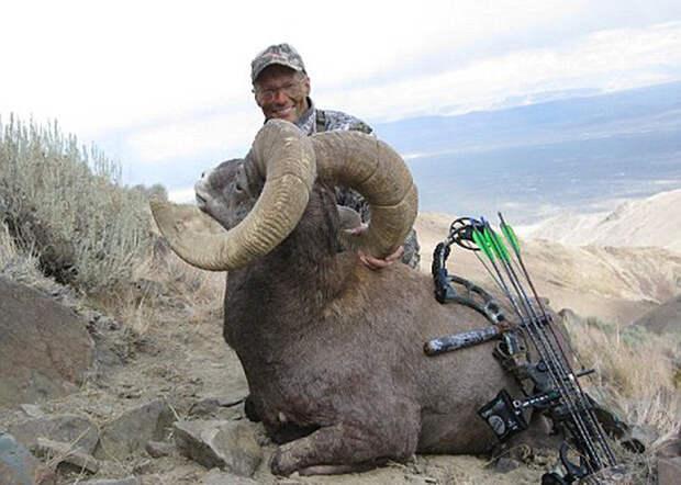 Сесил, самый знаменитый лев Зимбабве, был убит американским охотником зимбабве, нелегальное сафари, сука дантист