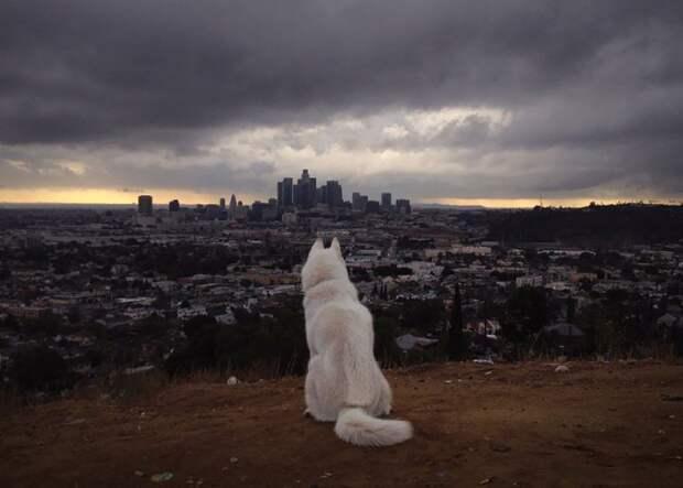 путешествие по США Джона Шторца и его собаки Вольфа (12)