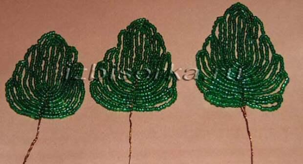 листья гортензии