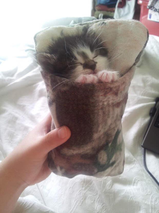 27. В спальном мешке котенок, сон