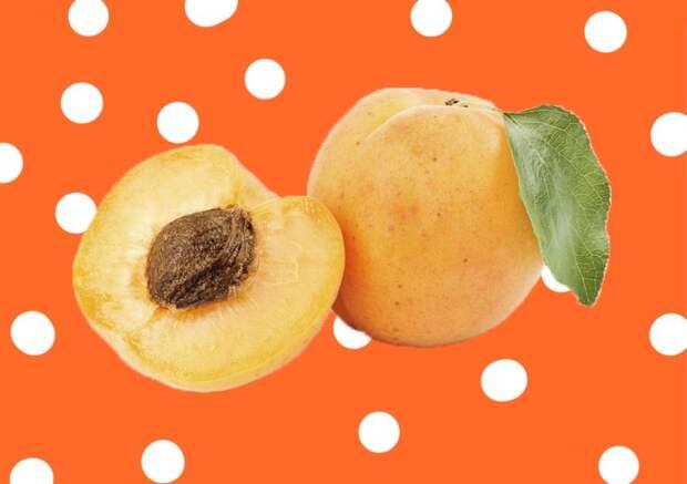 Как посадить саженец абрикоса осенью: советы начинающим садоводам