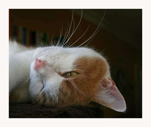 Смешные и просто красивые фотографии кошек (136 фото)